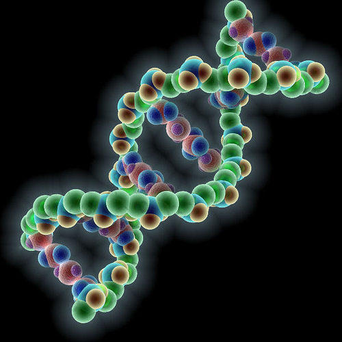 dna molecule  3d model max obj mtl 3ds fbx 1