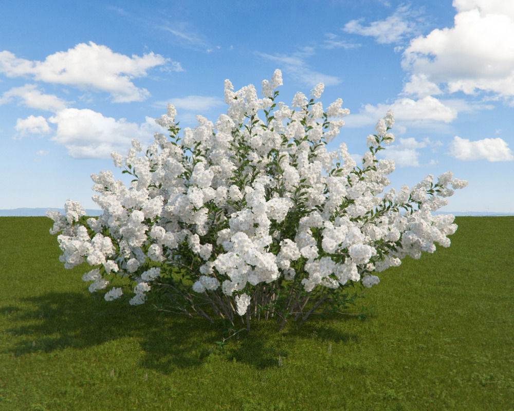 3d model serviceberry cgtrader serviceberry 3d model max 1 altavistaventures Gallery
