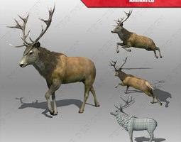 VR / AR ready 3d asset stag animated