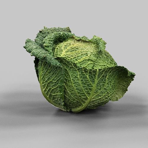 savoy cabbage 3d model obj mtl 1