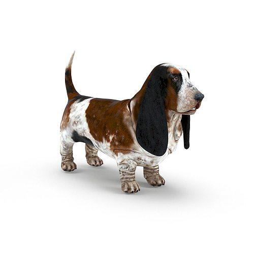 basset hound 3d model low-poly max obj mtl fbx 1