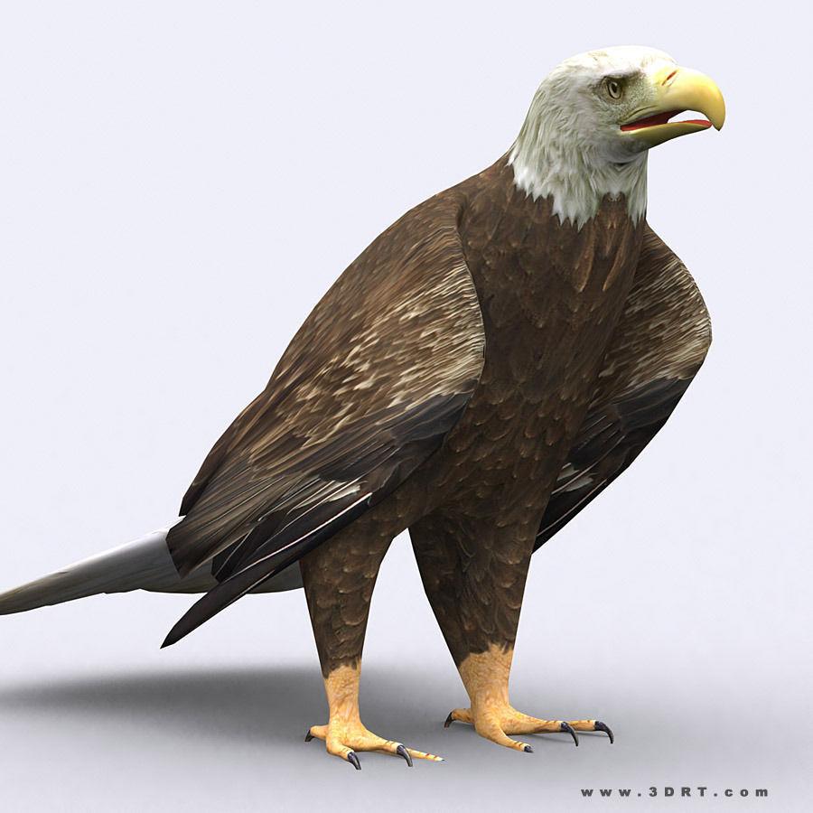 3DRT - Eagle