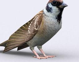 3DRT - Sparrow 3D Model