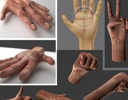 game-ready 3d model animated rigged  hands