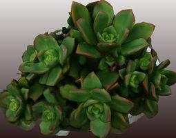 VR / AR ready kleinia plant 3d scan - low polygon