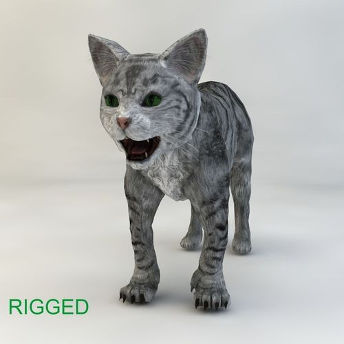 cat rigged 3d model rigged c4d 1