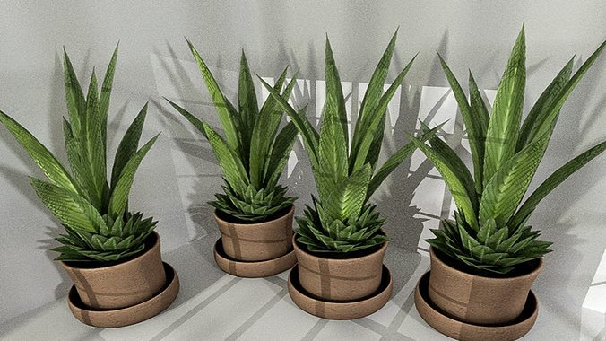 indoor pot plant 3 low-poly 3d model low-poly obj 3ds fbx dxf stl blend 1