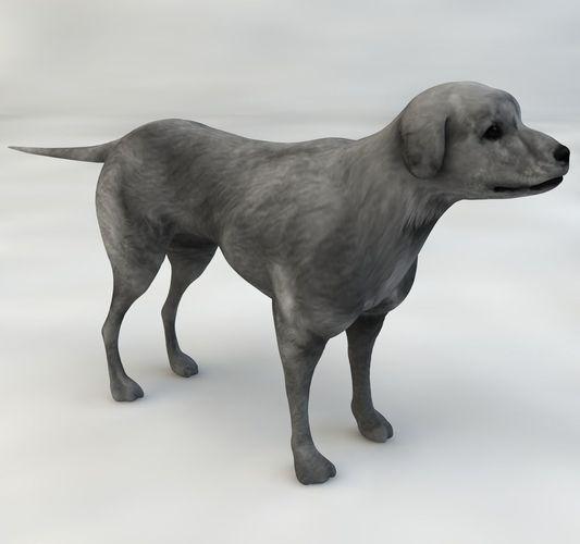 Dog half breed 3d model animated rigged max obj c4d mtl cgtrader com