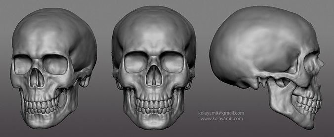skull ztl 3d model obj ztl 1