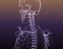 skeleton of a human x-ray scan renderready 3d model
