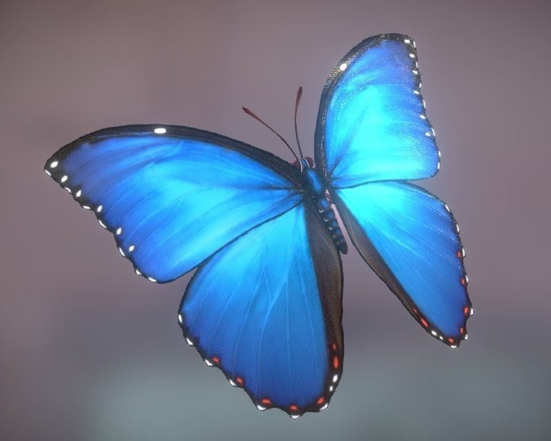3d Model Animated Butterfly Vr Ar Low Poly Fbx Tga