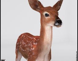 Fawn Deer 3D