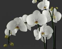 3D model White orchid in glass pot with stones