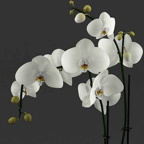 white orchid in glass pot with stones 3d model max obj mtl 1