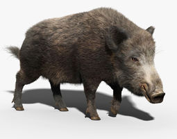 Wild Boar FUR RIGGED 3D Model
