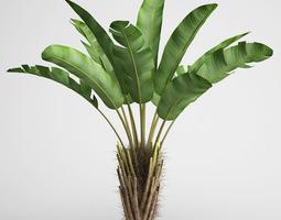 cgaxis wild banana tree 08 3d