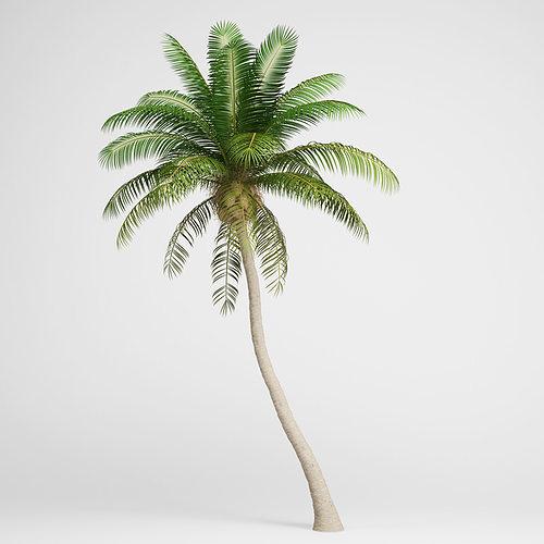 cgaxis coconut palm 04 3d model max obj mtl fbx c4d 1
