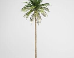 3d cgaxis date palm 03