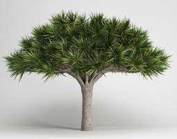cgaxis canary islands dragon tree 13 3d model