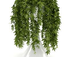 Climbing Plant 3D model