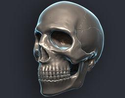 Skull 3D Model 3D Model