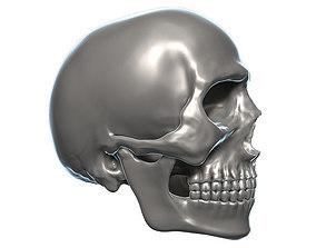 Skull 3D Model Zbrush OBJ