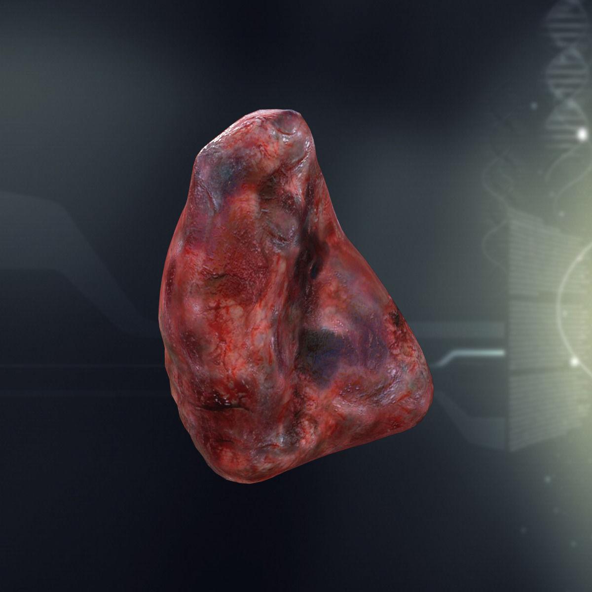 3d Model Human Spleen Anatomy Cgtrader