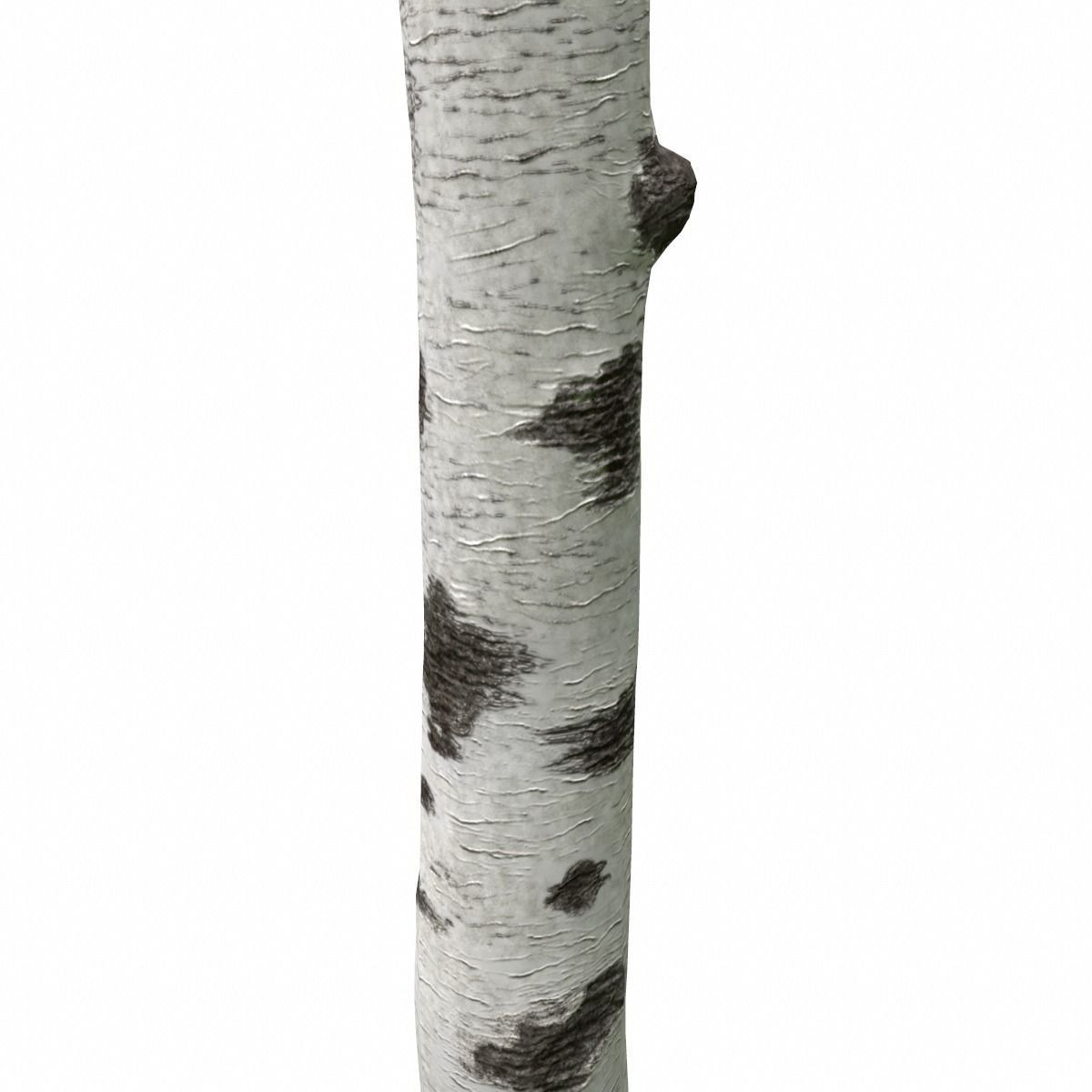 Birch Tree Trunk | 3D model