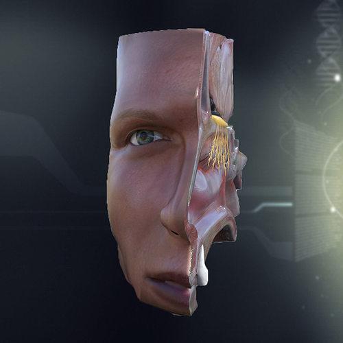 Nose anatomy 3d