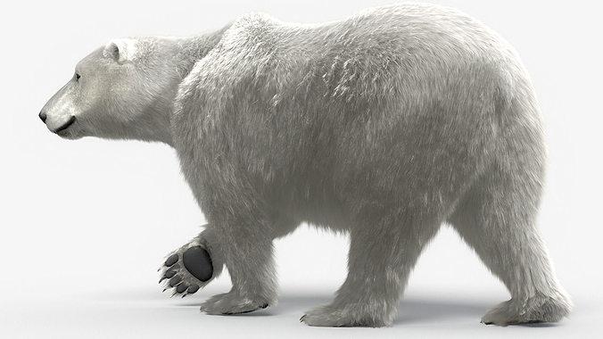 bear-polar-maya 3d model rigged ma mb rib slc sl slo 1