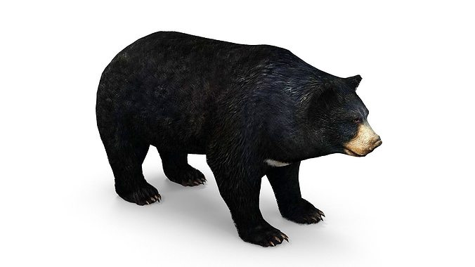 bear low poly 3d model max obj fbx dae mtl 1