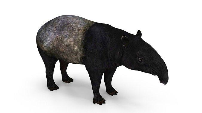 tapir   3d model low-poly max obj mtl fbx stl dae 1