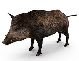 Wild pig 3D asset
