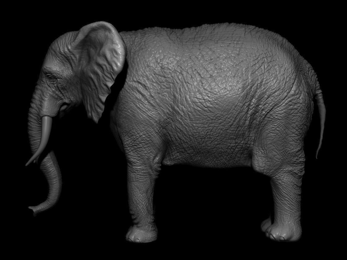 African elephant with tusks and wrinkles | 3D model