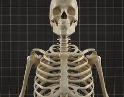 Anatomy skeleton 01 3D model
