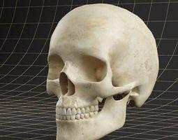 Anatomy skull 01 3D Model
