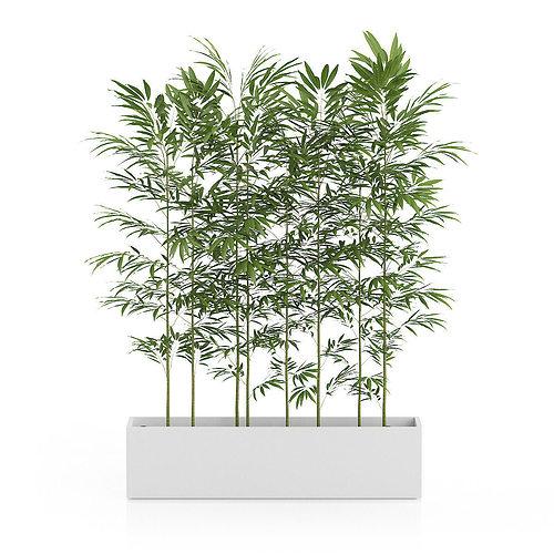 bamboos in large rectangular pot 3d model max obj mtl fbx c4d 1
