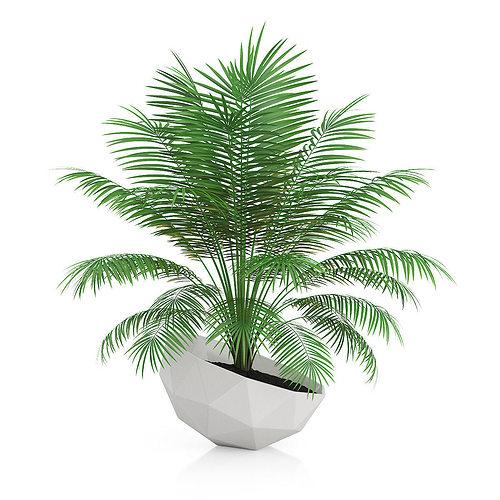 palm tree in modern pot 3d model max obj fbx c4d mtl 1