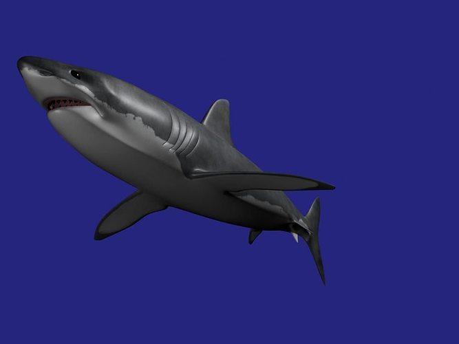 shark aaa 3d model low-poly obj mtl ma mb 1