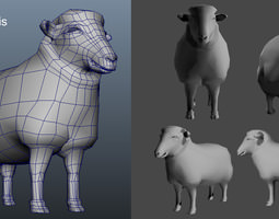 3D model Male Female Sheep AAA