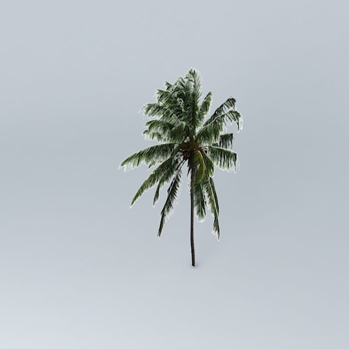 3D model Malayan Coconut Tree | CGTrader