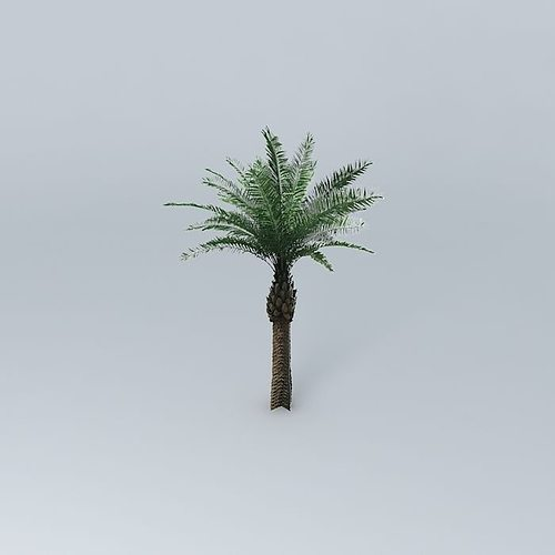Date Palm Tree 3D model | CGTrader