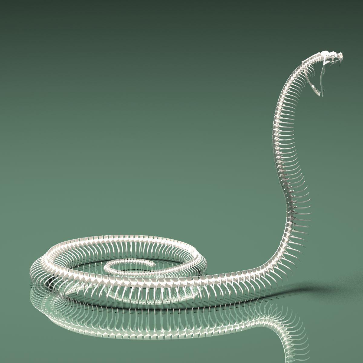 Anaconda skeleton - photo#18