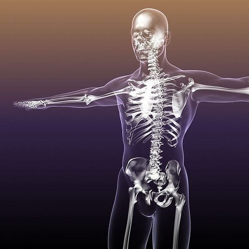 human skeleton in body 3d model max obj 3ds fbx c4d stl 1