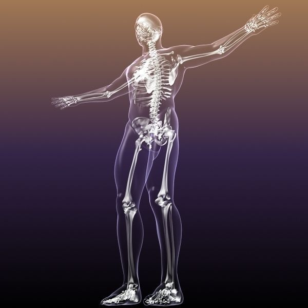 Human Skeleton in Body 3D | CGTrader