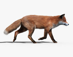 Red Fox FUR ANIMATED 3D Model
