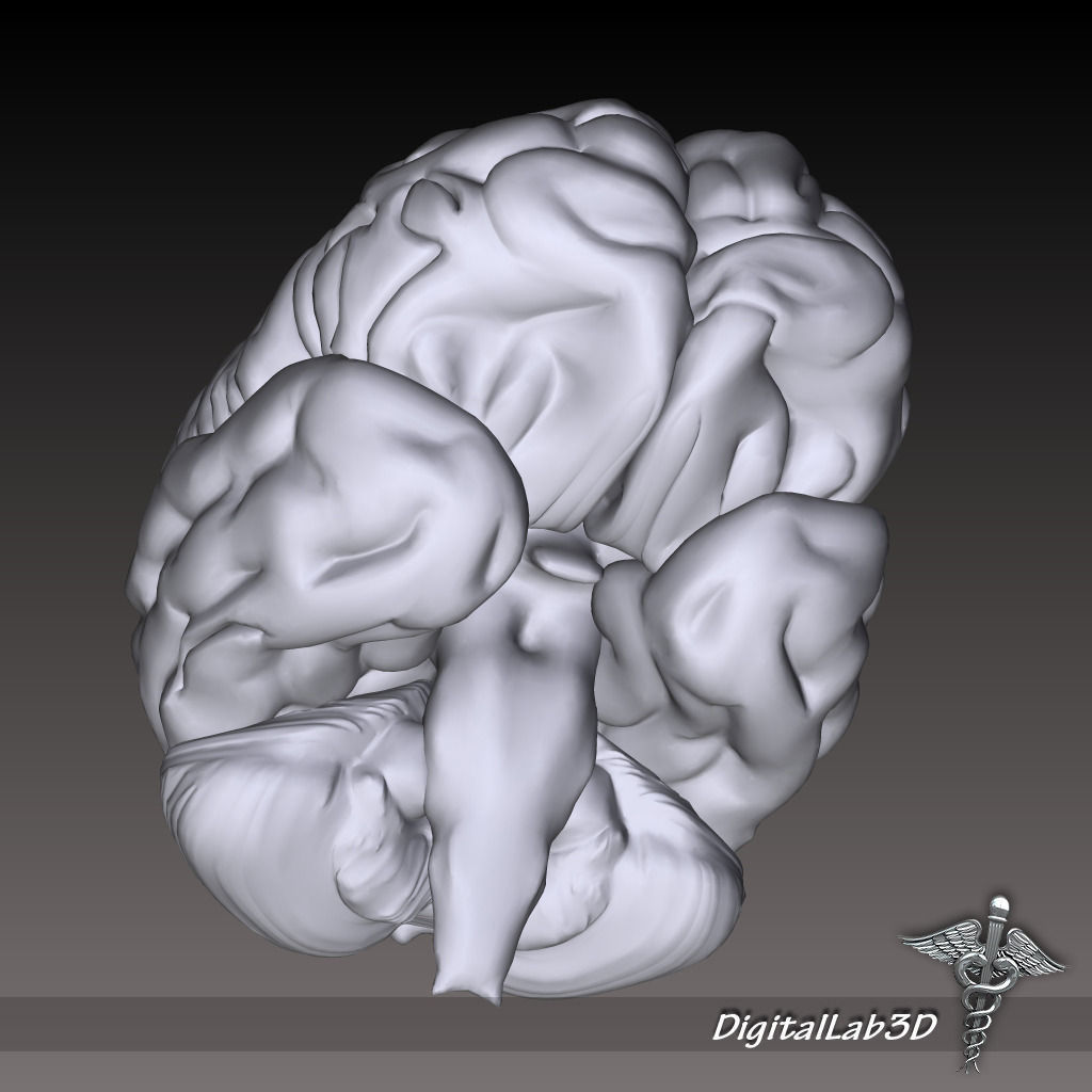 Head Anatomy Collection 3D model | CGTrader