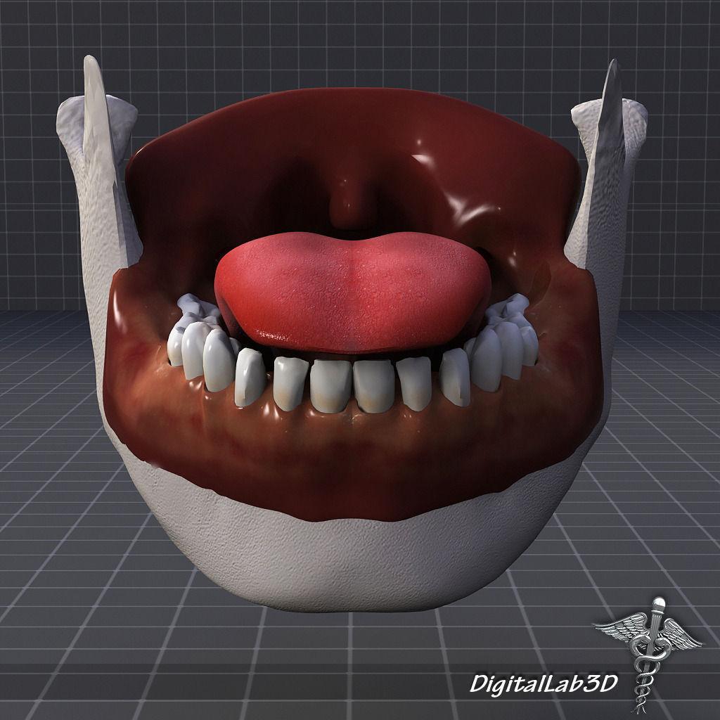 3d Model Human Tongue Anatomy Cgtrader