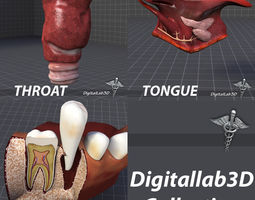 Tongue Throat and Teeth Collection 3D model