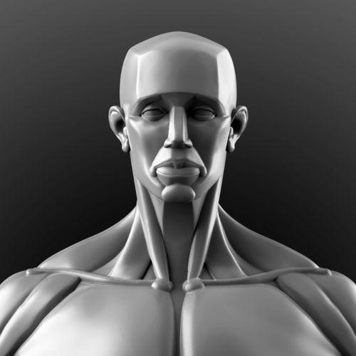 human anatomy sculpture  3d model obj mtl ztl 1